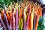 gekleurde-wortels